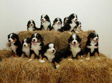 Free Pups Stock Photos - 2397573