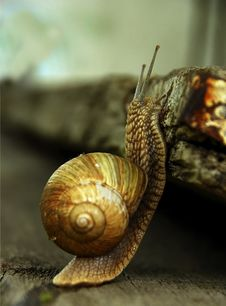 Free Snail Fast Stock Photography - 2397812