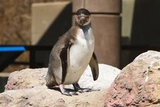 Free Penguin Power Stock Photography - 2397942