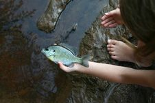 Free Fish In The Hand Worth Two Stock Images - 2399234
