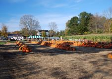 Free Pumpkins Harvested Stock Photos - 2399873