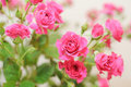 Free Bouquet Of Pink Roses Stock Photo - 23905470