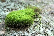 Free Moss Royalty Free Stock Image - 23902266