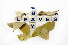 Free Bay Leaves Royalty Free Stock Image - 23907416
