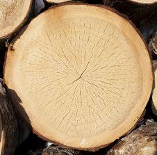 Free Stump Of Tree Felled Stock Photo - 23909560