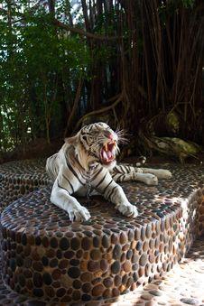 Free Tiger Royalty Free Stock Image - 23909886