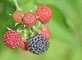 Free Berries Royalty Free Stock Image - 23912546