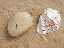 Free Natural Stone And Shell Stock Photography - 23911802