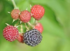 Free Berries Royalty Free Stock Image - 23912546
