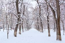 Winter  Landscape Park Stock Photography