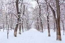 Free Winter  Landscape Park Stock Photography - 23913042
