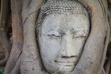 Free Closeup Head Of Buddha Royalty Free Stock Photography - 23918097