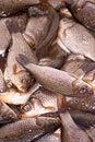 Free Small Dead Fish Stock Image - 23929091