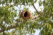 Free Bird Nest Stock Photos - 23920223
