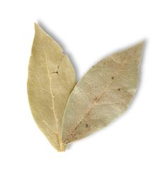 Two Bay Leaves Stock Image