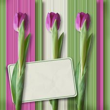Free Retro Greeting Card With Tulips Stock Photography - 23924482