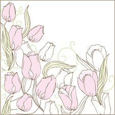 Rose Tulips Royalty Free Stock Images