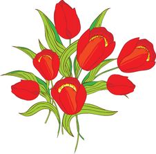 Free Red Tulips Royalty Free Stock Photography - 23925557