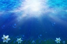 Free Underwater Scene With Flowers Stock Images - 23926334
