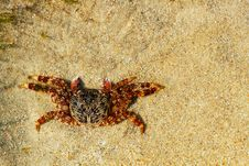 Free Beautiful Orange Colored Crab Resting On Sand Royalty Free Stock Photos - 23926458