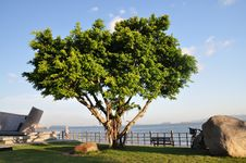 Free A Green Tree Stock Images - 23929384