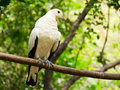 Free White Pigeon Stock Images - 23933044
