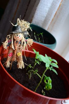 Free Scarecrow In Flower Pot Royalty Free Stock Photography - 23932677