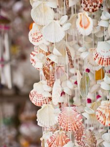 Free Scallop Shell Mobile Stock Photos - 23932953