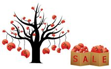 Free Discount Tree Stock Images - 23938994