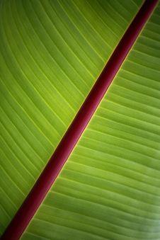 Free Banana Leaf Detail Stock Image - 23940041