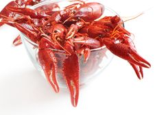 Free Crawfish Royalty Free Stock Images - 23946609