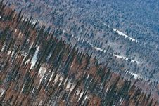 Free Aerial View On The Forest Royalty Free Stock Image - 23946786