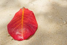 Free Red Leaf On The Sand Stock Images - 23946844