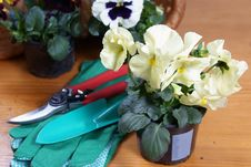Free Pansy With Gardening Tools Stock Photos - 23946973