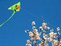Free Almond Blossoms And Kite Royalty Free Stock Images - 23950809