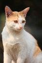 Free Cat Portrait Royalty Free Stock Image - 23958626