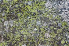 Free Rock Moss Texture Stock Photos - 23951373