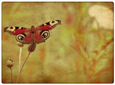 Free Grunge Butterfly Background Royalty Free Stock Photos - 23959128