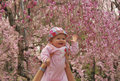 Free Little Baby Touching Cherry Blossom In Kyoto Stock Photos - 23965963