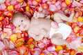 Free Happy Newborn Baby Girl Lying Among Rose Petals Stock Photo - 23966500