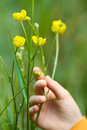 Free Yellow Flowers With A Hand Stock Images - 23967114