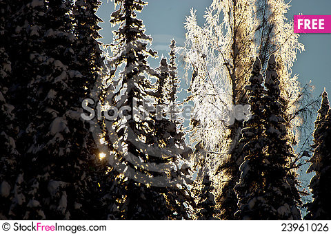 Free Sun Shining Through The Forest Royalty Free Stock Image - 23961026