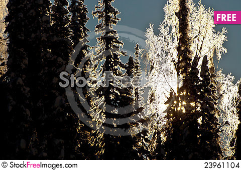 Free Sun Shining Through The Forest Stock Images - 23961104