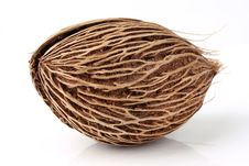 Cerbera Oddloam S Seed Royalty Free Stock Photography