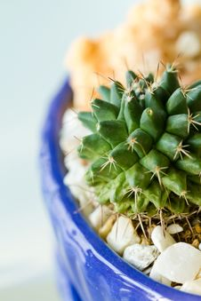 Free Cactus Stock Photography - 23965022
