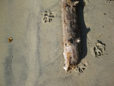 Free Drift Log On Beach Royalty Free Stock Image - 23966766