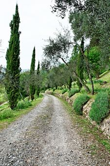 Free Tuscan Country Royalty Free Stock Photos - 23968798