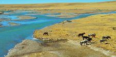 Free The Horse On The Qinghai-Tibet Plateau Royalty Free Stock Photography - 23973767
