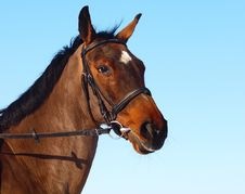 Free Brown Horse Stock Photography - 23977402