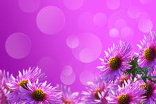 Free Purple Flowers Royalty Free Stock Photo - 23978485